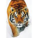 Tiger Snow - Maxi Poster - 61 x 91.5cm