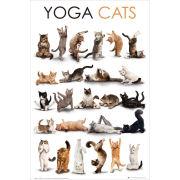 Yoga Cats - Maxi Poster - 61 x 91.5cm