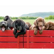 Puppy Red Wagon - Mini Poster - 40 x 50cm