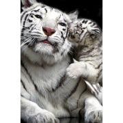 Tiger Kiss - Maxi Poster - 61 x 91.5cm