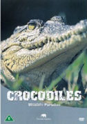 Wildlife Paradise - Crocodiles