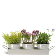 Garden Trading Set of 3 Pots on Tray - Clay