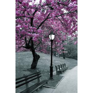 Central Park Blossom - Maxi Poster - 61 x 91.5cm
