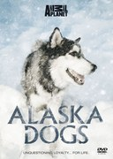 Alaska Dogs