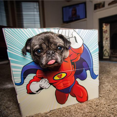 Animal Adventures - Pet Photo Box