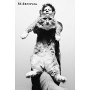 Ed Sheeran Cat - Maxi Poster - 61 x 91.5cm