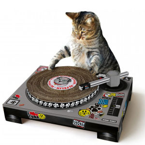 Cat Scratching DJ Deck