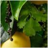 Molton Brown Black Peppercorn Body Lotion 300ml: Image 5