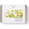 Dr. Hauschka Clarifying Face Care Kit: Image 2