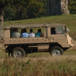 Half Day Safari for Two at Knepp Wildland Safaris
