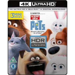 Pets - 4K Ultra HD