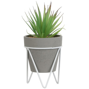 Succulent in Pot - Grey