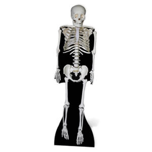 Skeleton Lifesize Cardboard Cut Out