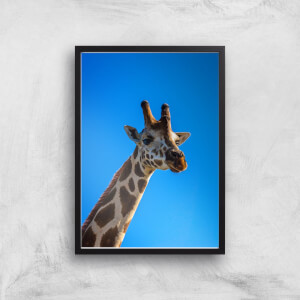 Giraffe Giclee Art Print