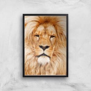 Majestic Lion Giclee Art Print