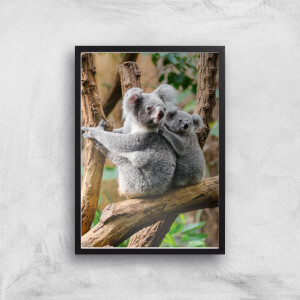 Koala Bear Giclee Art Print