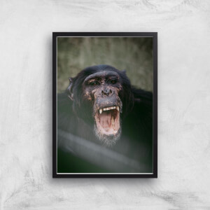 Chimpanzee Giclee Art Print