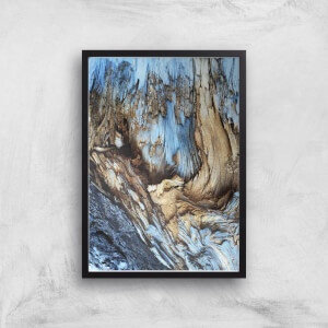 Old Forest Giclee Art Print