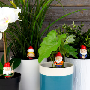 Naughty Gnomes - Mini Plant Pot Planters
