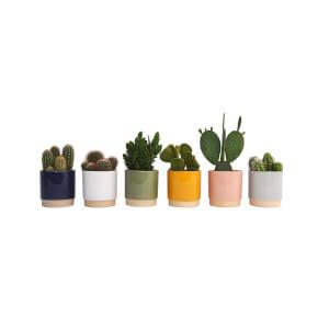 Cactus mix in Eno Duo pot 13cm