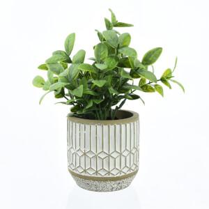 Leafy Plant in Cement Pot - Small