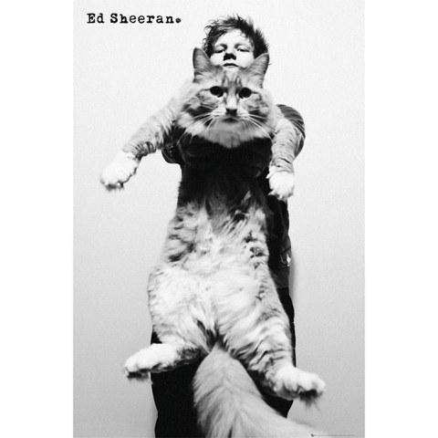 Ed Sheeran Cat - Maxi Poster - 61 x 91.5cm