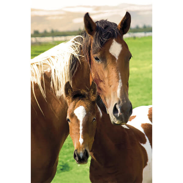 Horses Mare and Foal - Maxi Poster - 61 x 91.5cm