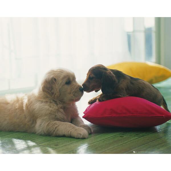 Puppy Kiss - Mini Poster - 40 x 50cm