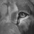 Versus Versace Men's Faded Lion Logo Sweatshirt - Black: Image 3