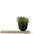 Menu Grow Pot with Wooden Board: Image 1