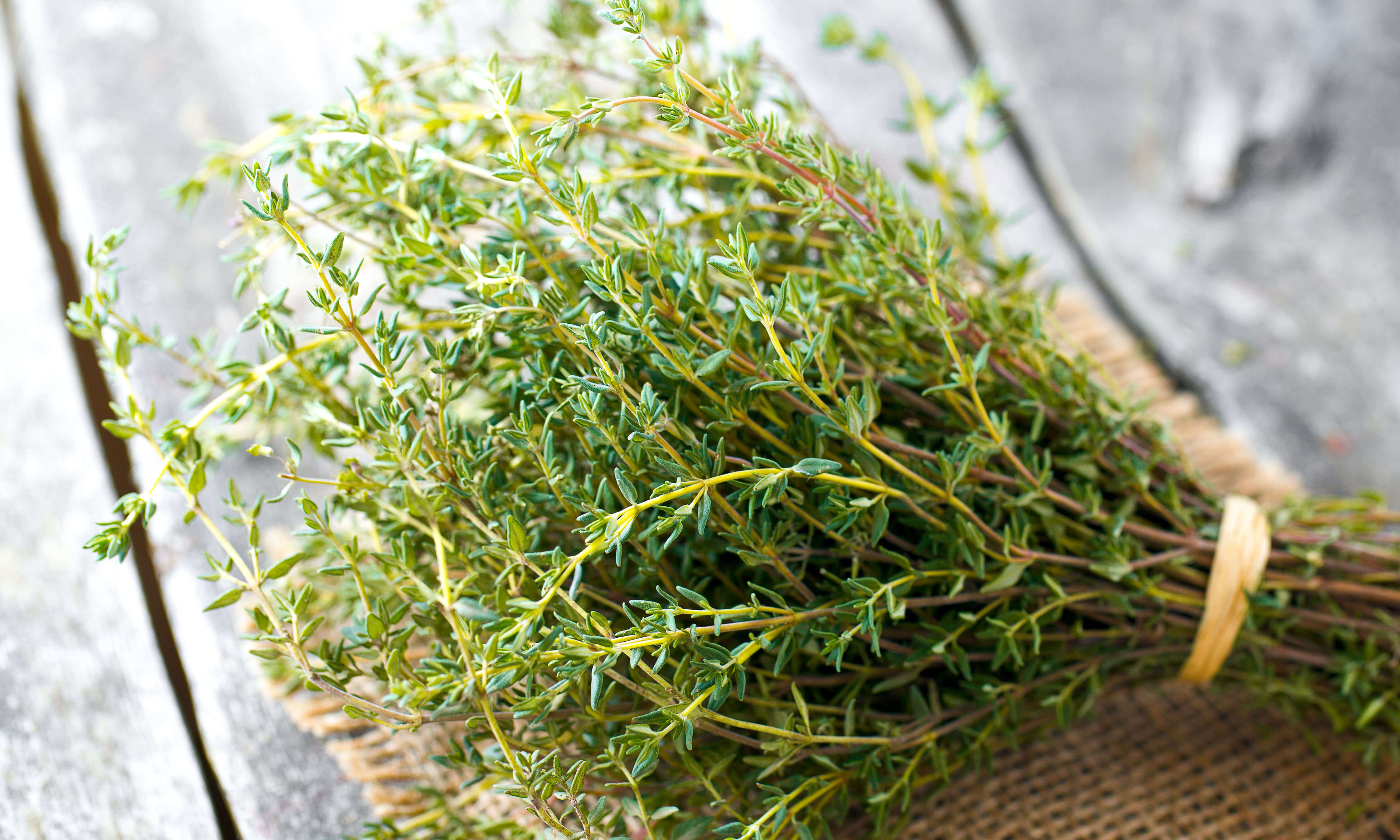 Thyme Oil Uses & Benefits