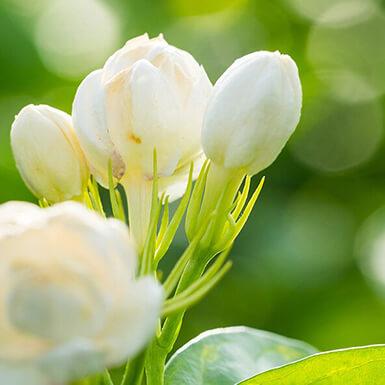 sobre ceras florales