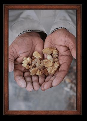 Frankincense ORIGIN: OMAN