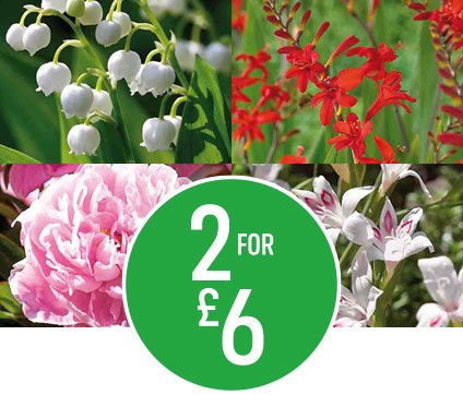 Get 2 for £6 on £3.95 Summer & Edible Bulbs