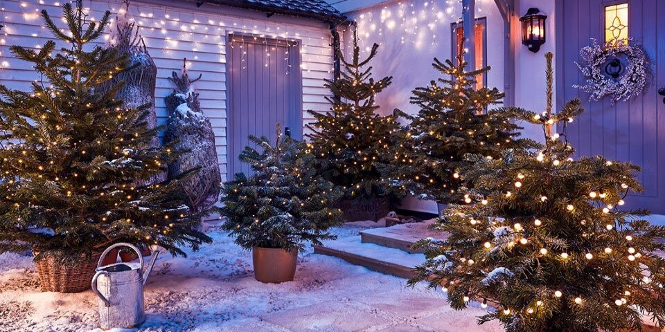 Christmas trees surrounded by snow