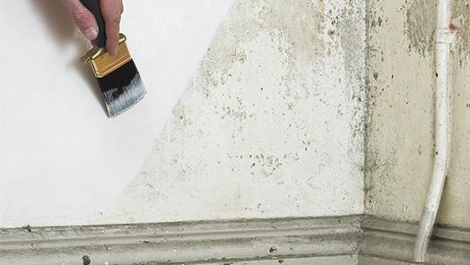 Anti-Mould Paint