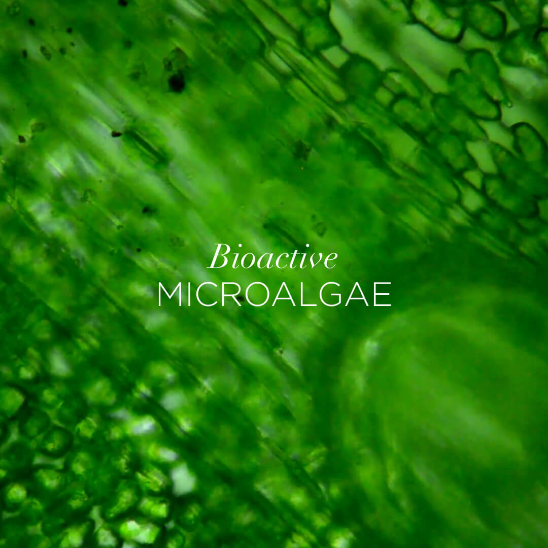 Bioactive Microalgae - A bioactive that shields skin from the damaging effects of cortisol, which compromises the integrity of skin cells. Helping to restore the Circadian rhythm, it increases skin's ability to metabolise retinal & Healing Concentrate™ and repair itself.