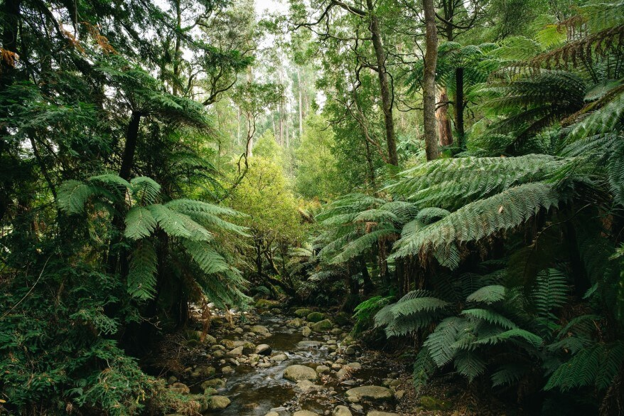 Image of a lush forest