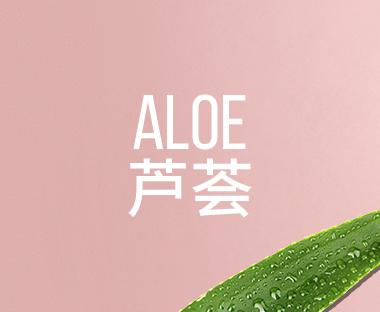 Aloe  芦荟